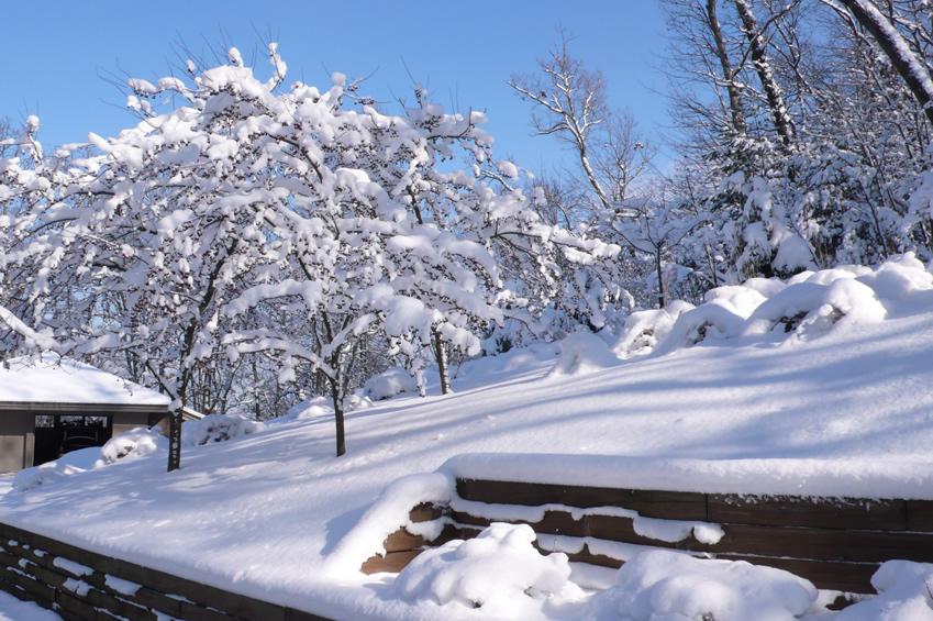snow_area.jpg